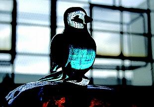 Hand Sculpted Bird