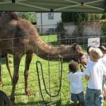 Petting Farm Animals Visit Montessori Summer Camp