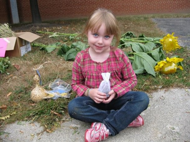 Madison Long, age 4, a veteran of a previous sunflower contest, assisted her grandparents in growing her sunflowers.