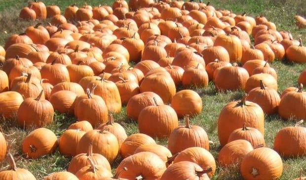 Pick a Pumpkin from the Pumpkin Patch
