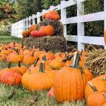 Pick Out a Pumpkin at the Dearborn Firefighters' Pumpkin Patch