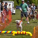 """Detroit Lion's quarterback, Drew Stanton cheers on his """"Mutt"""" at last year's event during a fun competition in Doggie Dash DeLure."""