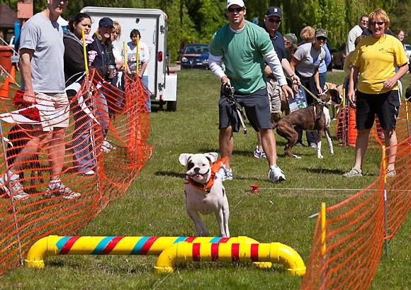 "Detroit Lion's quarterback, Drew Stanton cheers on his ""Mutt"" at last year's event during a fun competition in Doggie Dash DeLure."