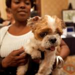 A four-legged adoptable goes for a walk on last year's Black Tie Promenade.