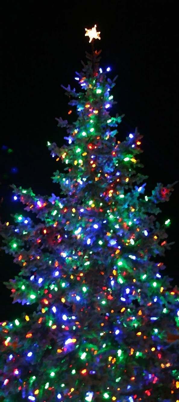 Tree Lighting Ceremony in Dearborn