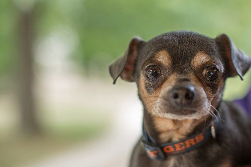 "Pudge, the Shelter's official ""spokesdog"" during the ASPCA challenge (going on now)."