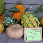 Savor the Flavor – Harvest Season at Greenfield Village