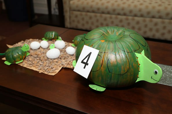 Pumpkin Turtle