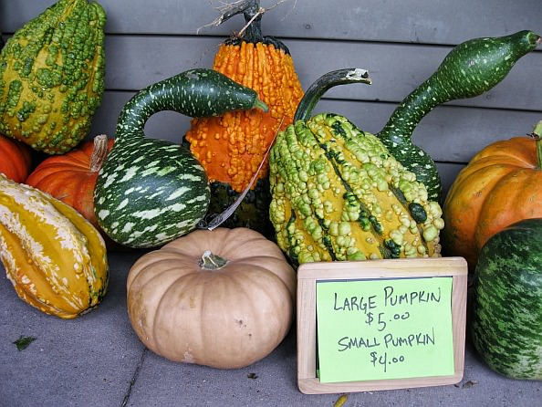 Colorful squash and pumpkins from 2011 Fall Flavor Days (photo by Douglas Vos)