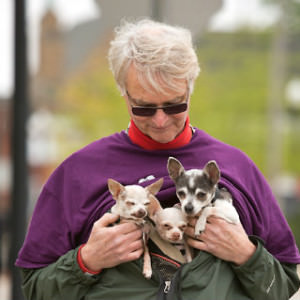 Mutt Strut walker with three chihuahuas.