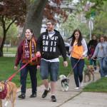 Mutt Strutt dog walkers walking the course in Dearborn.